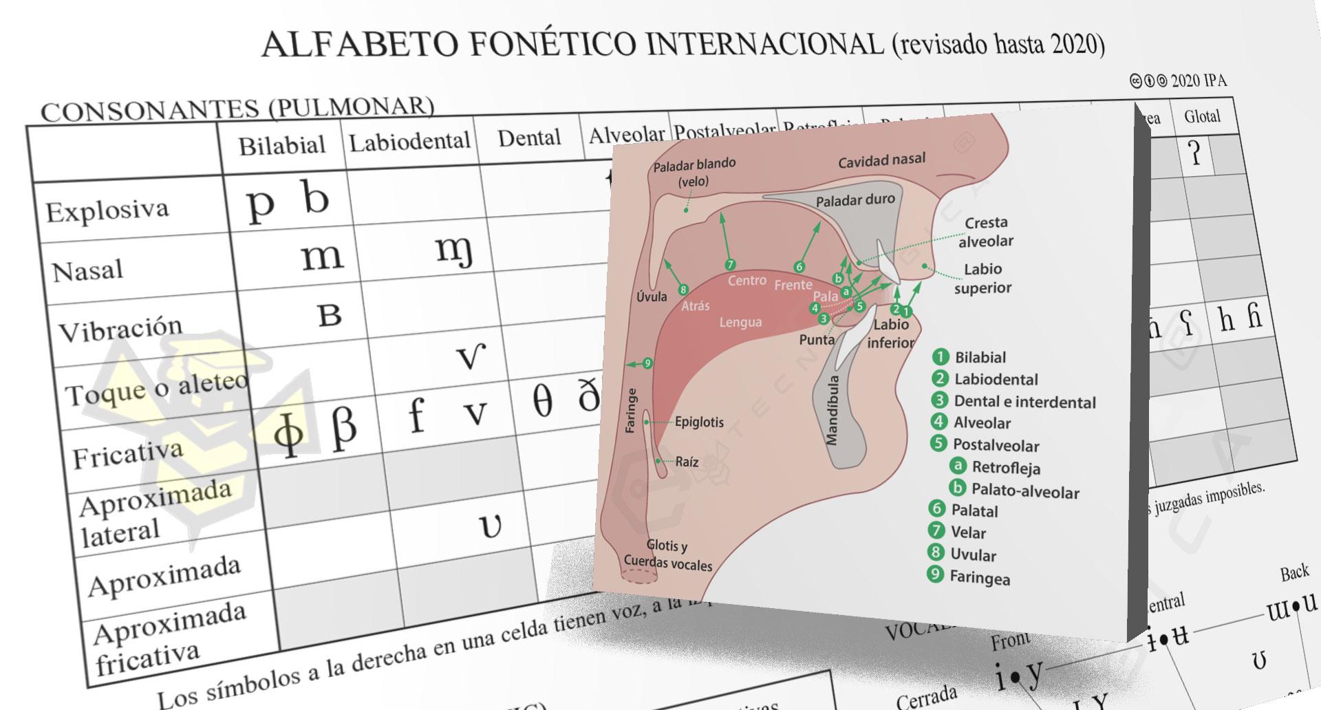 Alfabeto Fonético Internacional (IPA) en Español